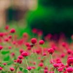 Однолетние и многолетние травы
